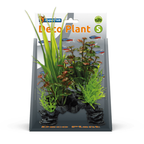 SF DECO PLANT S ROTALA