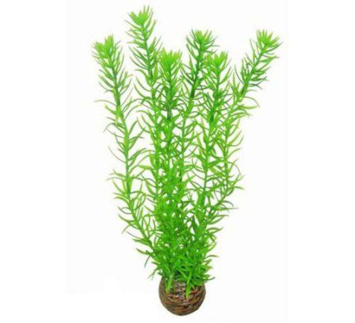 SF EASY PLANT HOOG 30 CM NR. 1