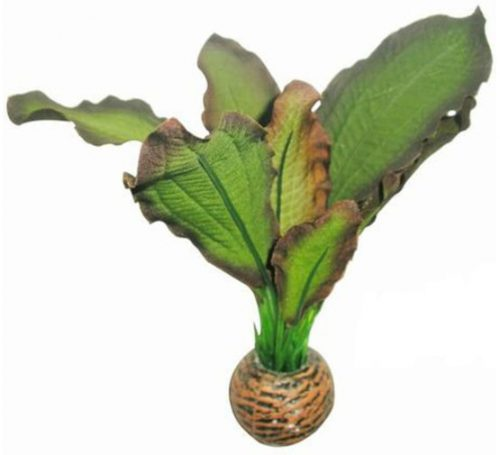 SF EASY PLANT LAAG 13 CM NR. 3