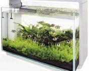 Superfish Home 60 Aquarium - Wit