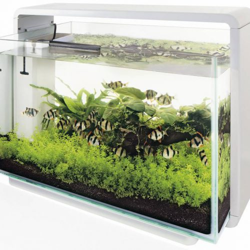 Superfish Home 60 Aquarium - Wit